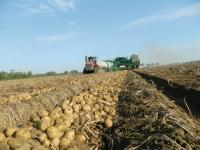 Michigan potato growers mostly serve the potato chip industry east of the Mississippi River. Potatoes generate $1.67 billion in annual economic activity in Michigan, where production reached 1.6 billion pounds in 2012, according to the USDA.