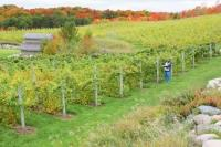 Willow Vineyards in Suttons Bay