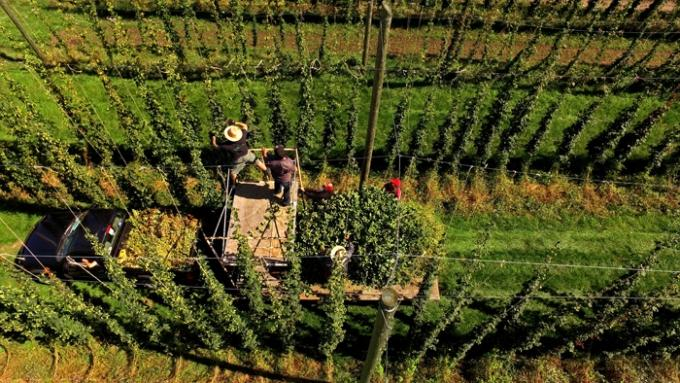 Agribank: PE Firm Acquires New Mission Organics Hop Farm In Northern