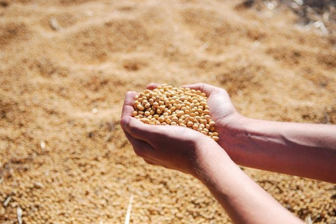Tillerman Seeds makes first acquisition, seeks to consolidate regional seed producers