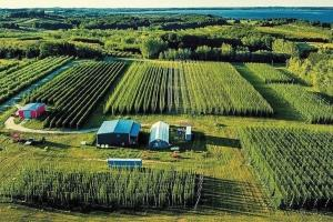 Omena-based Michigan Hop Alliance LLC is reporting a bumper hop crop this year, despite a delayed start to the growing season. Hop growers around the region are in the middle of wrapping up their harvest season.