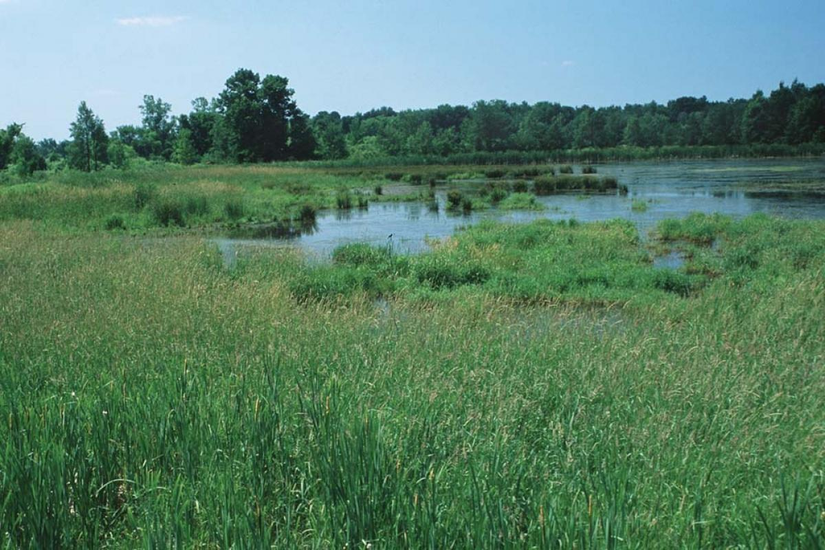 Critics say the Trump administration's proposal to scale back national water standards could jeopardize the protection of thousands of wetlands such as this one in Newaygo County.