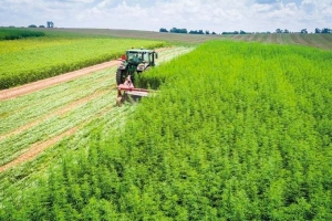 Report: Michigan grew nearly 4,000 acres of hemp in first year of pilot program