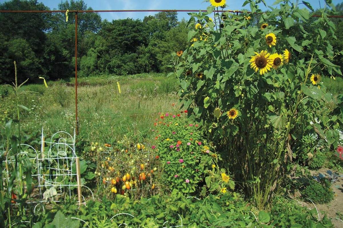 The Grand Rapids Environmental Education Network (GREEN) is working to develop a hands-on outdoor curriculum for the Grand Rapids Public Schools. Partners include Blandford Nature Center, shown here, as well as GVSU and the Lower Grand River Organization of Watersheds, among others.