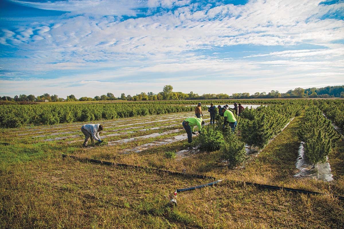 Shepherd, Mich.-based Ag Marvels was among the growers in the first-year ag pilot program for industrial hemp in Michigan. Ag Marvels is a vertically integrated grower, processor and marketer of the crop, which it aims to convert into consumer products such as grain, fiber or CBD.