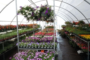 Garden centers, greenhouses focus on survival amid COVID-19 shutdown