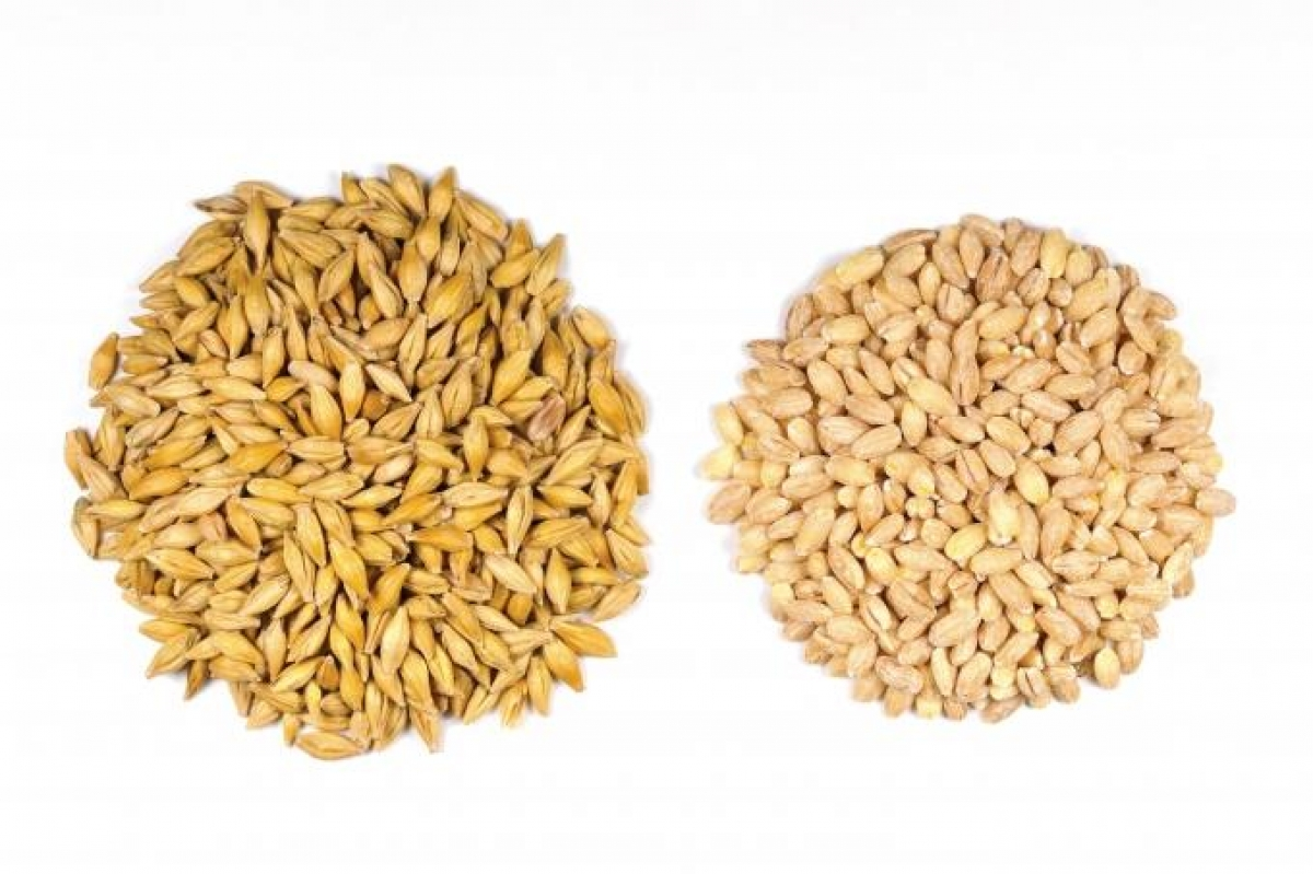 Planned Independent Barley & Malt facility signs supplier agreement with The Andersons