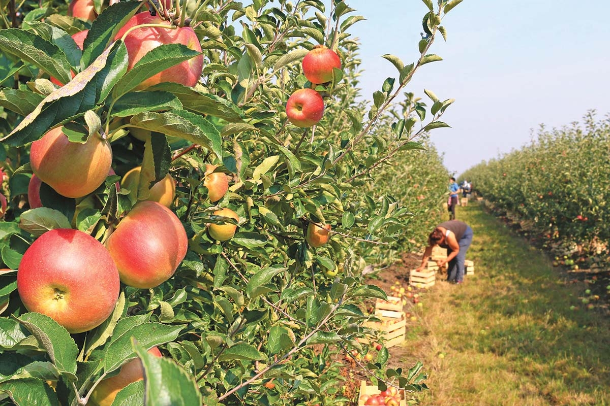 Pandemic exacerbates concerns for migrant farm workers
