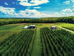 The Michigan Craft Beverage Council will be charged with funding agricultural research — such as on hop production — that would benefit Michigan's wineries, breweries, cideries and distilleries. Michigan Hop Alliance's farm in Omena is shown here.