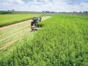 The University of Kentucky's Department of Plant and Soil Sciences has been among the national leaders in industrial hemp research, including growing its own hemp plots. The university program is administered by the Kentucky Department of Agriculture.