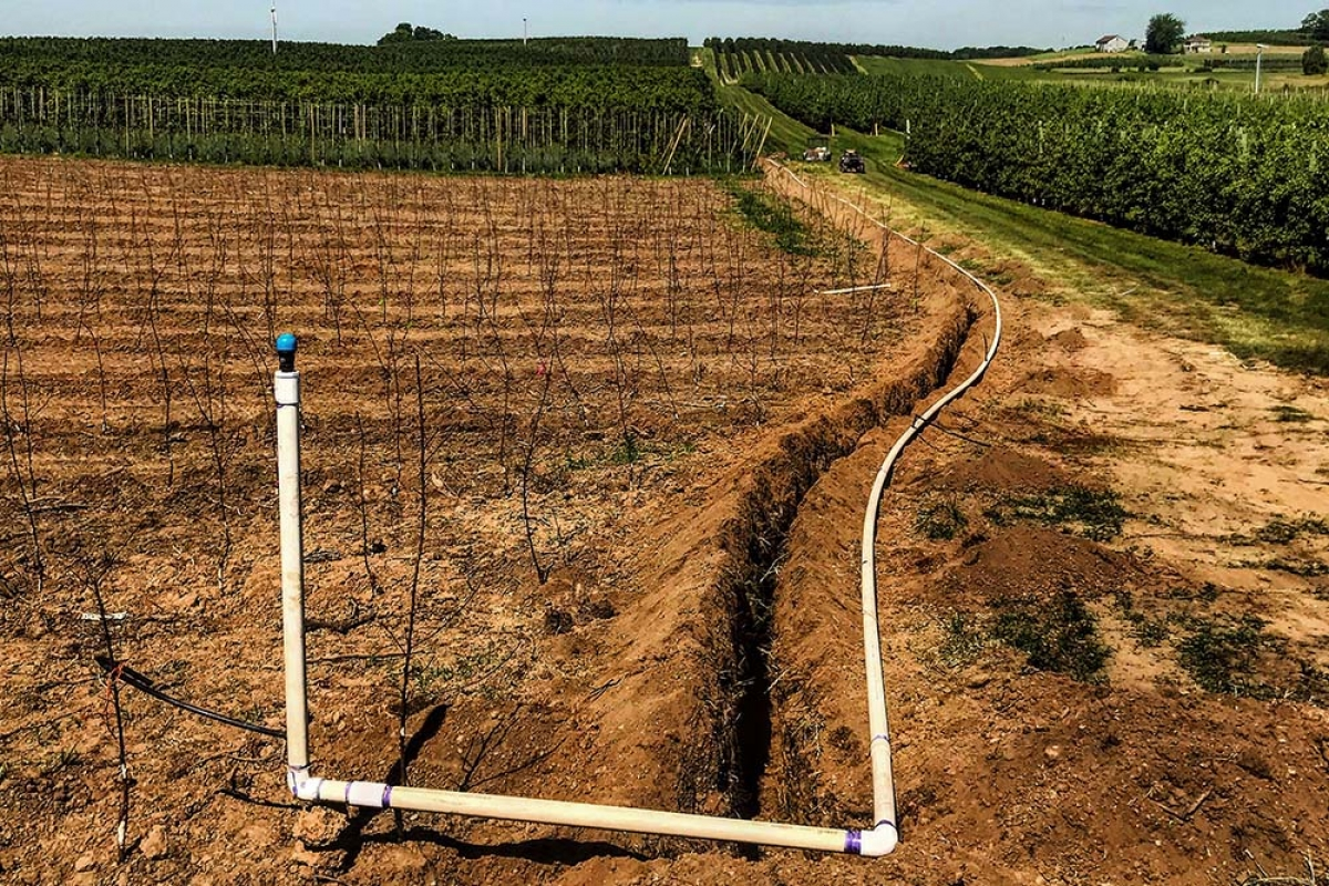 Sparta-based J. Schweitzer Ridge Farms LLC installed drip irrigation at its orchards as part of a mitigation strategy to deal with changing seasonal precipitation patterns. The drip irrigation systems efficiently put water into the roots of apple trees, leading to less evaporation.