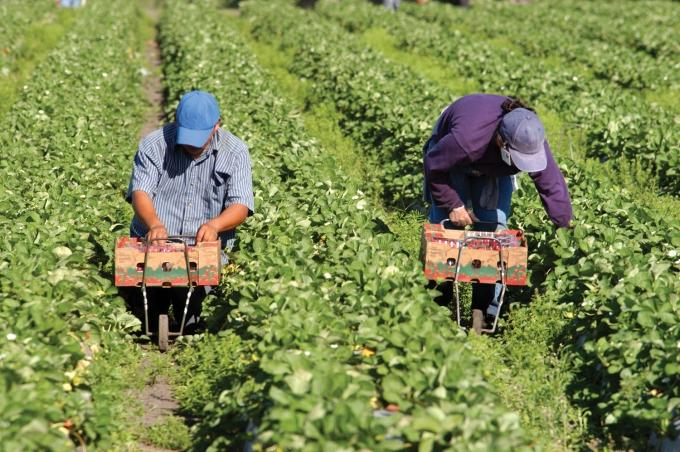 Nonprofit uses its for-profit services firm to help farmers find workers