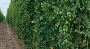 As federal budget cuts threaten funding for research into hops and barley, industry groups like the Brewers Association have stepped up their investment in various scientific programs.