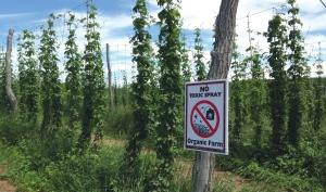 Michigan ranks fourth nationally for hops with 810 acres planted last year, up 25 percent from the previous year.