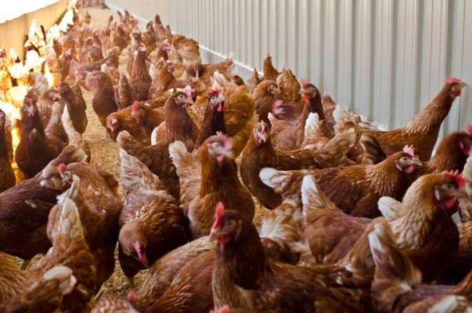 Herbruck's Poultry Ranch to expand in Ionia